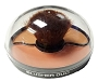 Giovi Blusher Duo Dome Shaped 1 4.8 g